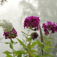 Цветной туман. :: Владимир Гилясев