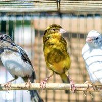 Птички :: Богдан Петренко