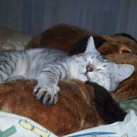 Мой Бася спит.... :: lenrouz