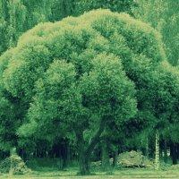 Дерево в парке :: Натали V