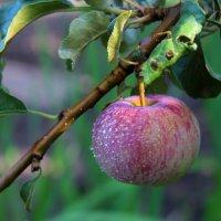 август , спеет урожай :: leoligra