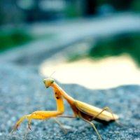 насекомое :: лена трошина