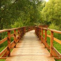 Мост в лес :: Антон Северовъ