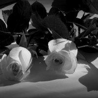 розы :: эля файдель