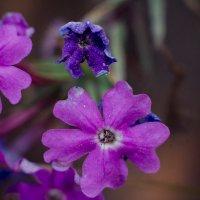 и у цветов есть лицо :: Виктория Чуб