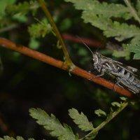 В мире насекомых :: N. Efimkina