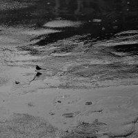Безстрашная птичка... :: VADIM *****