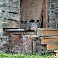 одинокий кот :: Екатерина Липинская