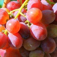 Виноград на лозах, в кистях созревший под горой. :: Валентина ツ ღ✿ღ