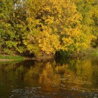 Осень золотая :: Роман В.