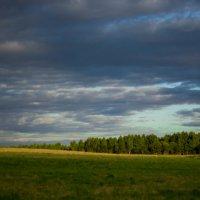 В чистом поле :: Roman Belitsky