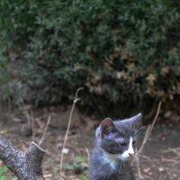 Котёнок :: Павел Печковский