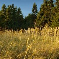 Осенние травы :: Валерий Талашов