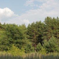 Бийск, лесопарковая зона. :: Олег Афанасьевич Сергеев