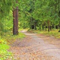 дорога в лесу :: Александр Семейников