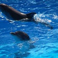 Дельфины :: Olga Photo