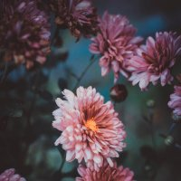 цветы жизни :: Da Zh