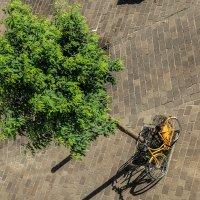 Bikelife/Gent :: Alena Kramarenko