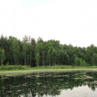 Заросшее озеро. :: Борис Митрохин