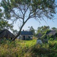 На окраине посёлка ветхий дом ещё стоит. Он давно уже заброшен, он давно уже забыт. :: Юлия Бабитко