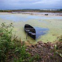 Озерцо-болотце :: Татьяна Малинина