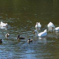 ......  на Келарском пруду. :: Galina Leskova