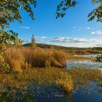 Травы, травы :: vladimir Bormotov