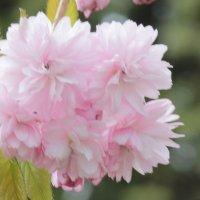 Цветочный хоровод-534. :: Руслан Грицунь