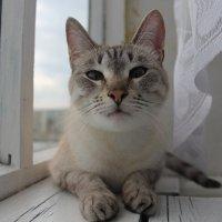 Соня :: Наталия Алексеевна