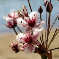 Нашла цветок :: Алла Матвеева