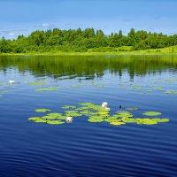 На озере 2 :: Валерий Талашов