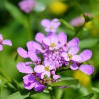 В саду :: Алла Матвеева