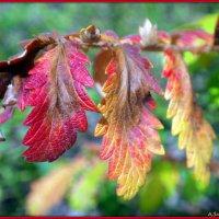 Вот и осень... :: Андрей Заломленков