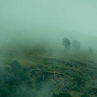 Туман в степи :: Zifa Dimitrieva