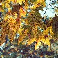 Осень в Анапе :: Михаил Тихонов
