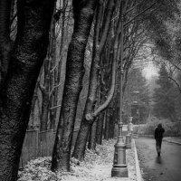 Первый снег :: Евгения Кирильченко