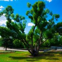 Просто интересное дерево :: Полковник Собакин