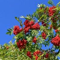 Осенняя краса :: Ольга