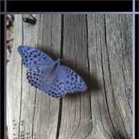 Где ты спрячешь от дождя крылышки свои,если солнце пропадёт,синий мотылёк? :: Наталия Григорьева