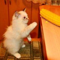 Ну дайте мне кукурузки! :: Виктор Евстратов