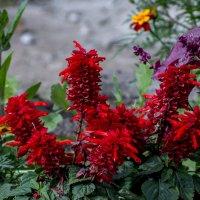 в цветочных джунглях :: gribushko грибушко Николай