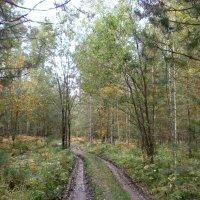 Осенняя дорожка в лесу :: aksakal88
