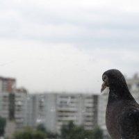 Присел у моего окна :: Виктория Большагина