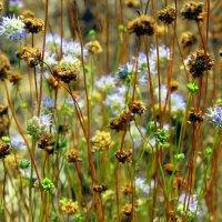 Превратил в сухостой травы августа зной и поблекла от жажды природа. :: Валентина ツ ღ✿ღ