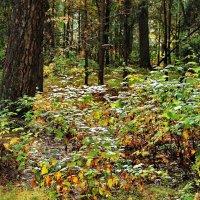 Тревожны запахи лесные... :: Лесо-Вед (Баранов)