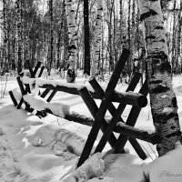 В черно - белом :: Светлана Воробьёва