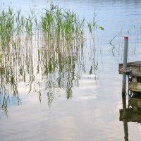 водяные травы :: Елена