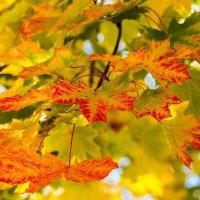 Осень :: Юрий Поздников
