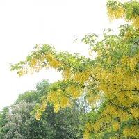 Цветочный хоровод-558. :: Руслан Грицунь