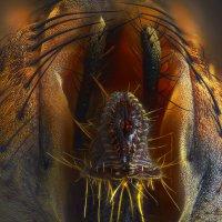 Из жизни насекомых :: Дак9 -